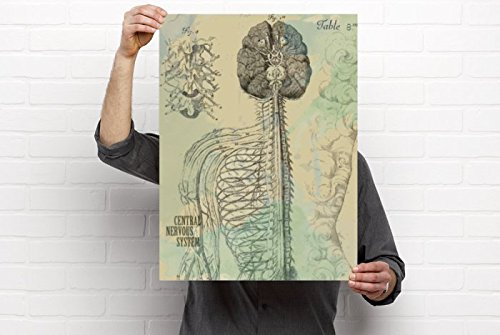 Clinic Artwork The Central Nervous System Medical Anatomy Artwork - 18'x24' Vinyl Poster, Chiropractic Art and Clinic Decor