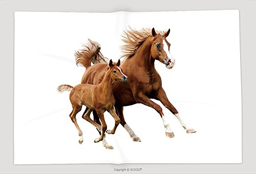 Supersoft Fleece Throw Blanket The Arab Mare With Foal Running Isolated On White Background - Foal Throw