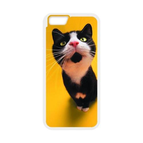 Sweet Curious Cat coque iPhone 6 Plus 5.5 Inch cellulaire cas coque de téléphone cas blanche couverture de téléphone portable EEECBCAAN07718