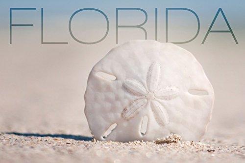 Florida-Sand-Dollar-on-Beach