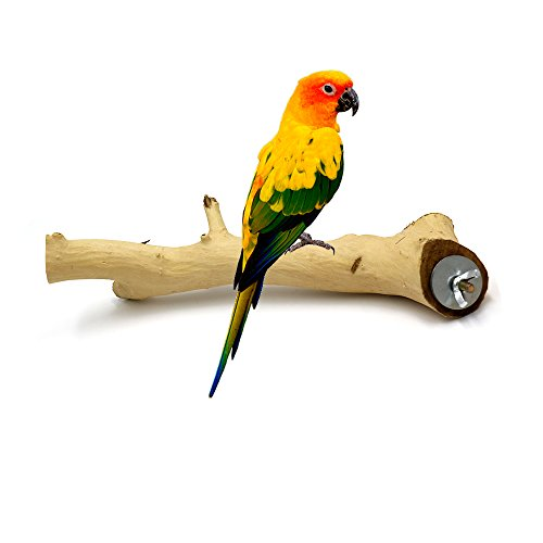 Borange Bird Perch Parrot Perches Natural Wood Branches for Parakeets for Small Large Birds Cockatiel Conure Cage Accessory (25cm/10 inch, diamter 2-3cm) by Borange