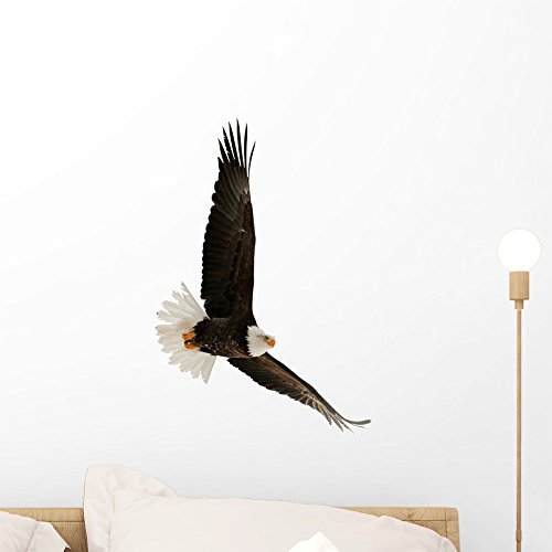 Bald Eagle Haliaeetus Leucocephalus Wall Decal by Wallmonkeys Peel and Stick Graphic (18 in H x 17 in W) WM152042