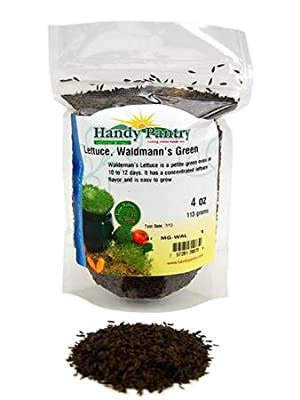 Waldmanns Green Lettuce Seeds: Non-GMO Vegetable Garden & Microgreens Seeds - Micro / Baby Salad Greens