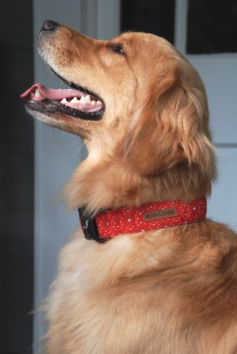 Dublin Dog Eco-Lucks Eco-Friendly Dog Collar, Firefly, Medium