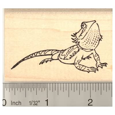 Bearded Dragon Rubber Stamp: Home & Kitchen