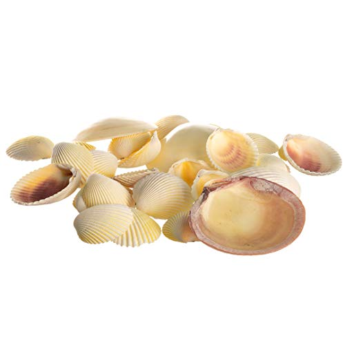 Colorful Sea Shell Mix | Beach Sunrise Shell Collection | Light Pink Polished Clam Shells with Colorful Cockle Shells | Shells for Craft and Decor | Plus Free Nautical Ebook by Joseph Rains