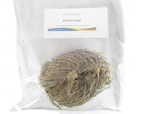 Herbs-Rose of Jericho Flower (1 Flower) Resurrection Fern - Selaginella Lepidophylla, from A Brown Dry Ball Into A Live Plant with Only Water, A Holy Item in Religions, Pagan, - Rose Jericho