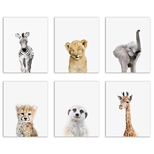 Baby Safari Animals Poster Prints - Set of Six Adorable Furry Portraits Wall Art Decor 8x10 Elephant - Giraffe - Lion - Cheetah - Zebra - Meerkat