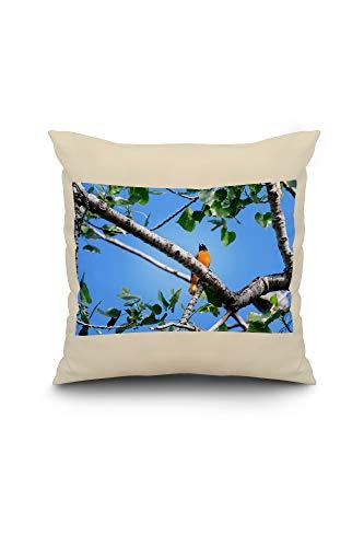 Lantern Press Baltimore Oriole Perched in a Tree - Photography A-92786 (18x18 Spun Polyester Pillow, White Border)