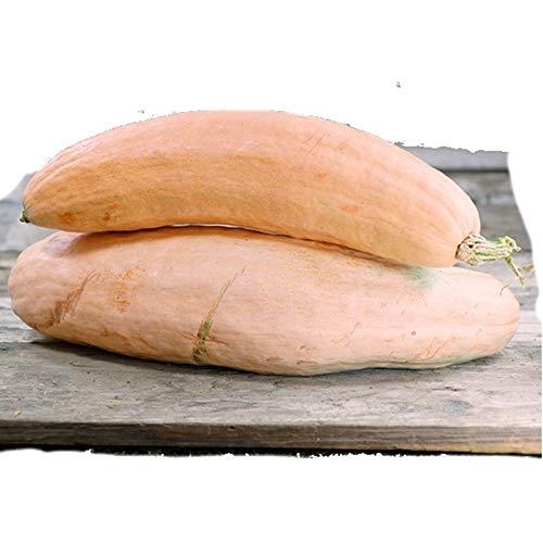 Banana Organically Growing - NIKITOVKASeeds - Pumpkin Pink Banana - 10 Seeds - Organically Grown - Non GMO