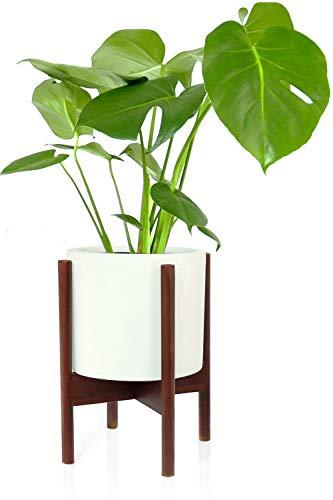 Fox & Fern Indoor Plant Stand Acacia - EXCLUDING 8 White Ceramic Planter Pot