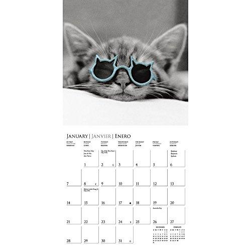 Classic Cats 2018 Wall Calendar Photo #2