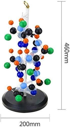 Het eiwit Model Versterkt structuurmodel for Onderwijs Research and Collection A 300 miljoen maal Rod-Like Protein 46 20cm 0827 Model