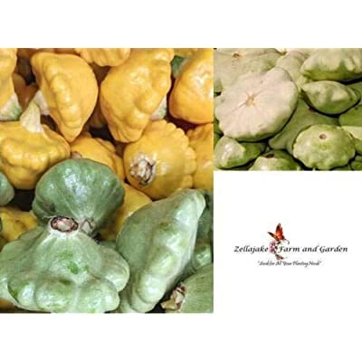 Toyensnow - Scallop or Patty Pan Mix Squash Seeds (5000 Seeds or 1 LB) : Garden & Outdoor