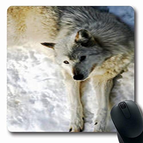 Pandarllin Mousepads Nature White Wolf Looking Hungry Up Wildlife Oblong Shape 7.9 x 9.5 Inches Oblong Gaming Mouse Pad Non-Slip Rubber Mat (The Hungry Wolf Hunts Best)
