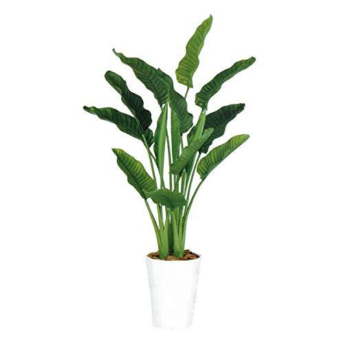 人工観葉植物 ストレリチアオーガスタMIX170 高さ170cm dt99174 (代引き不可) インテリアグリーン 造花 B07SYGLMQY