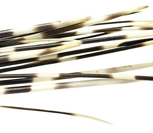 Porcupine Fancy Dress Costume (African Porcupine Quills 12-14