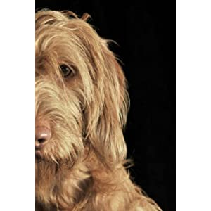 "Wirehaired Vizsla: Artified Pets Journal/Notebook/Diary 6"" by 9"" and 160 Pages 40"