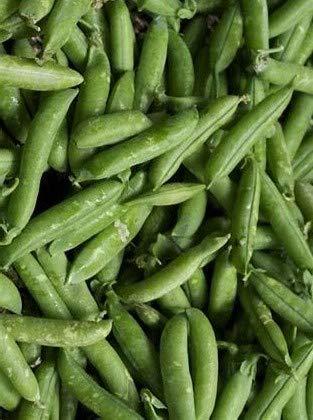 Oregon Sugar Snap Pea- 50 Seeds Non GMO- by Juju's Garden
