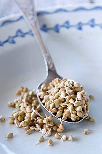 Semillas de trigo sarraceno orgánico crudo sin gluten (1 kg ...