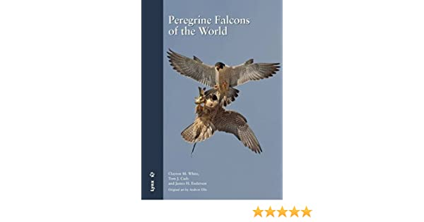 White Peregrine Falcon For Sale