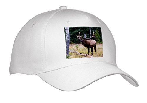 3dRose Danita Delimont - Elk - Bull Elk Bugling - Caps - Adult Baseball Cap - Elk Bugling Decal