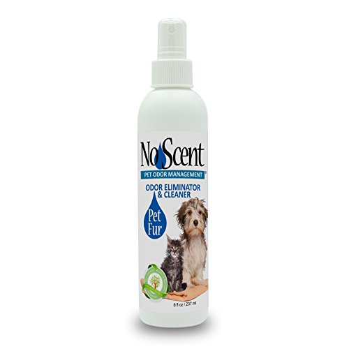 Believe Bath (No Scent Pet Fur - Professional Dog & Cat Grooming Odor Eliminator & Coat Cleaner Between Bath Spray - Safe Natural Fast Microencapsulating Smell Remover Fur Freshener All Pets (8 oz))