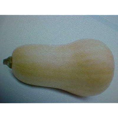 Grandiosy Farm Butternut Squash Seeds : Garden & Outdoor