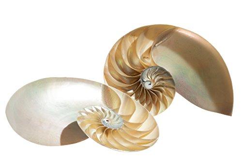 Nautical Crush Trading Nautilus Shell   Split Pearl Chambered Nautilus Seashell 6