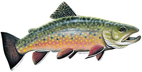 online store e19e8 706d2 Amazon.com  Saber-Tooth Co Brook Trout Decal sticker - Freshwater Fish  Collection - Small 6.5 X 3 Facing As Shown  Sports   Outdoors