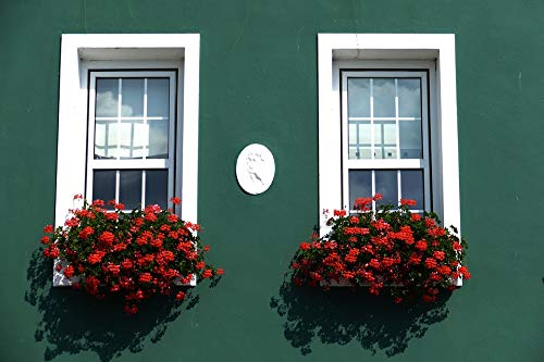 Home Comforts Peel-n-Stick Poster of Jersey Geranium Facade Relief Flower Box Window Vivid Imagery Poster 24 x 16 Adhesive Sticker Poster Print
