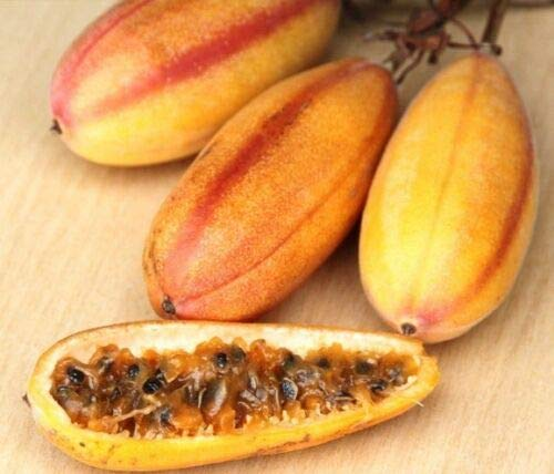 Succulent Seeds - Banana passionfruit, Passiflora MOLLISSIMA Passion Fruit Flower Seed 25 Seeds