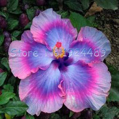 I Tipi Di Fiori.Green Seeds Co Diversi Tipi Di Fiori Di Ibisco In Stile
