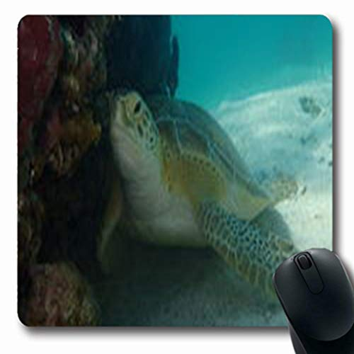 Pandarllin Mousepads Reef Green Turtle George Wildlife Bahamas Nature Oblong Shape 7.9 x 9.5 Inches Oblong Gaming Mouse Pad Non-Slip Rubber Mat