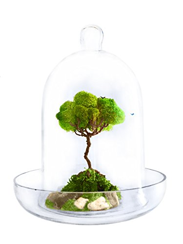 Artree Organic Glass Dome Terrarium - Artificial Plant Decoration For Office And Home Bonsai Tree - House Decor - Room Decor - Gifts For Women - Gifts For Men by Artree