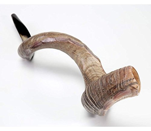 shofarot Israel Kudu Yemenite Schofar Horn (poliert ca. 88, 9cm–94New