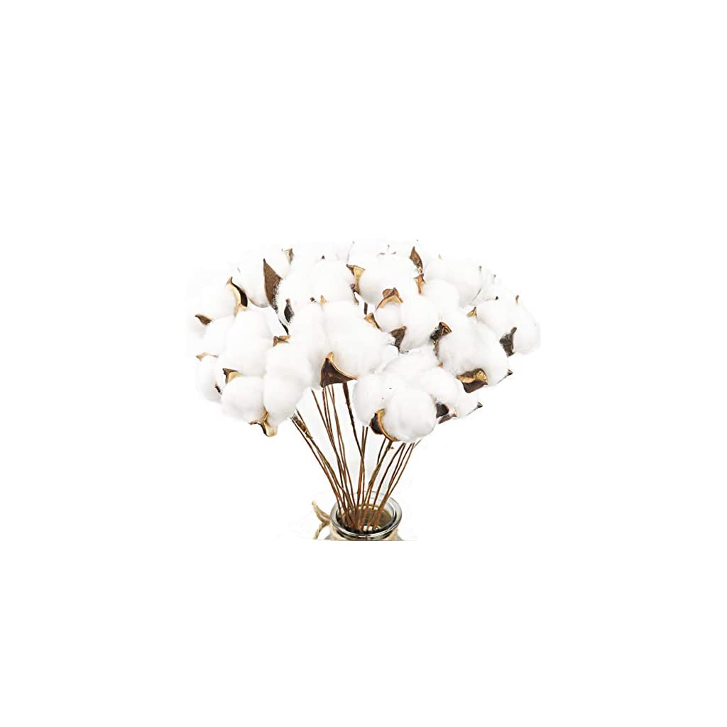 CEWOR-20Pack-Really-Natural-White-Cotton-Stems-Dried-Flower-Branch-for-Farmhouse-Style-Antique-Floral-Furniture-Wedding-Decoration-Cotton-Stems