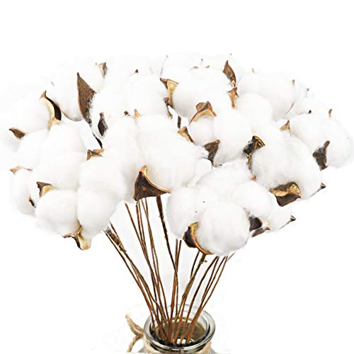 (CEWOR 20Pack Really Natural White Cotton Stems Dried Flower Branch for Farmhouse Style Antique Floral Furniture Wedding Decoration (Cotton)