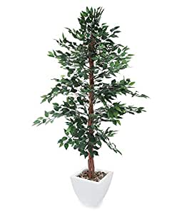 Closer To Nature 6ft Green Ficus Nitida Tree