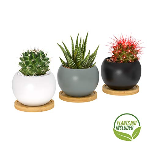 Succulent and Cactus Indoor Plant Pot - Small 3 Inch Minimalist Ball Shape Ceramic Planter with Drainage Hole and Bamboo Tray Perfect Gift Idea, Set of 3 Pots in Mixed ()
