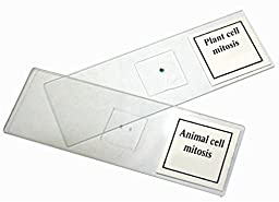 Walter Products B17121 Prepared Slide Set-Mitosis (Pack of 2)