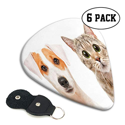 Guitar Picks 6 pcs,Close Up Portraits Of Jack Russell Terrier Dog And Scottish Straight Cat Photo