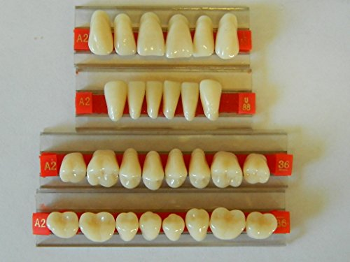 Halloween Horror Prop - Dental Quality Resin Teeth for Prop Building!]()