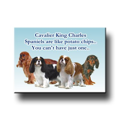 Cavalier King Charles Can't Have Just One Fridge Magnet - King Charles Magnet Cavalier