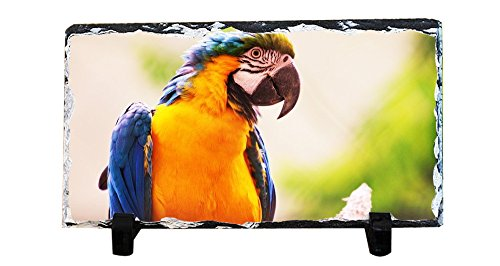 Parrot Photo Frame (Lidoy Lovers Gifts Personalized Photo Stone Rock Slate Plaque Picture Frame, Pet Photo Memorial Stone Flagstone, Custom Friendly Parrot Blue-and-yellow Macaw Photo Slate)