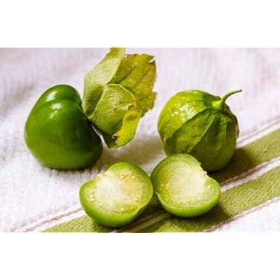Grandiosy TOMA Verde TOMATILLO Seeds Heirloom Salsa 20 Count Pkt : Garden & Outdoor