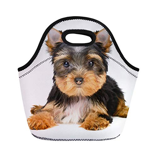 (Semtomn Neoprene Lunch Tote Bag Brown Yorkshire Terrier Puppy the Age of Month White Reusable Cooler Bags Insulated Thermal Picnic Handbag for Travel,School,Outdoors, Work)