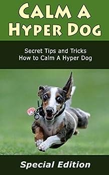 how to teach a hyper dog tricks