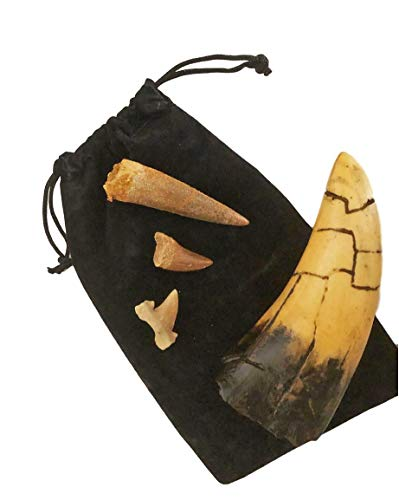 (Fossil Tooth Gift Collection -Set of 4 - Real Mosasaur, Spinosaurus, Shark and T-rex Replica)