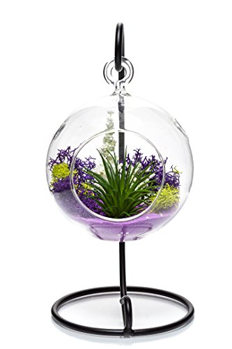 """(Nautical Crush Trading Air Plant Terrarium Kit 